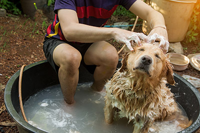 Can I wash my dog with just water?